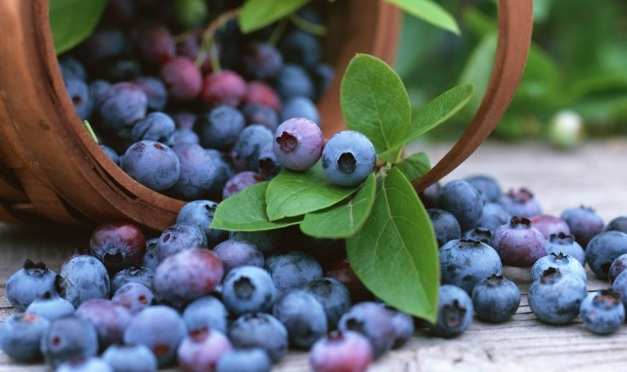 buah-blueberry